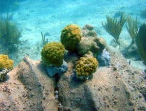 Coastal Engineering underwater