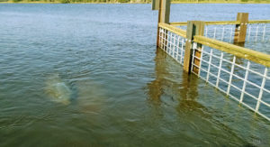 JEA District II WRF Outfall Modeling & Manatee Barrier Design