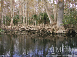 Water Resource & Human Value Assessments for Priority Springs silver river coastal